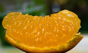 Thumb 800px citrus reticulata var. nobilis
